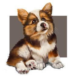 Corgi Pup by DesigningLua