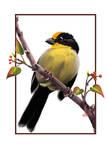 Unknown birdie