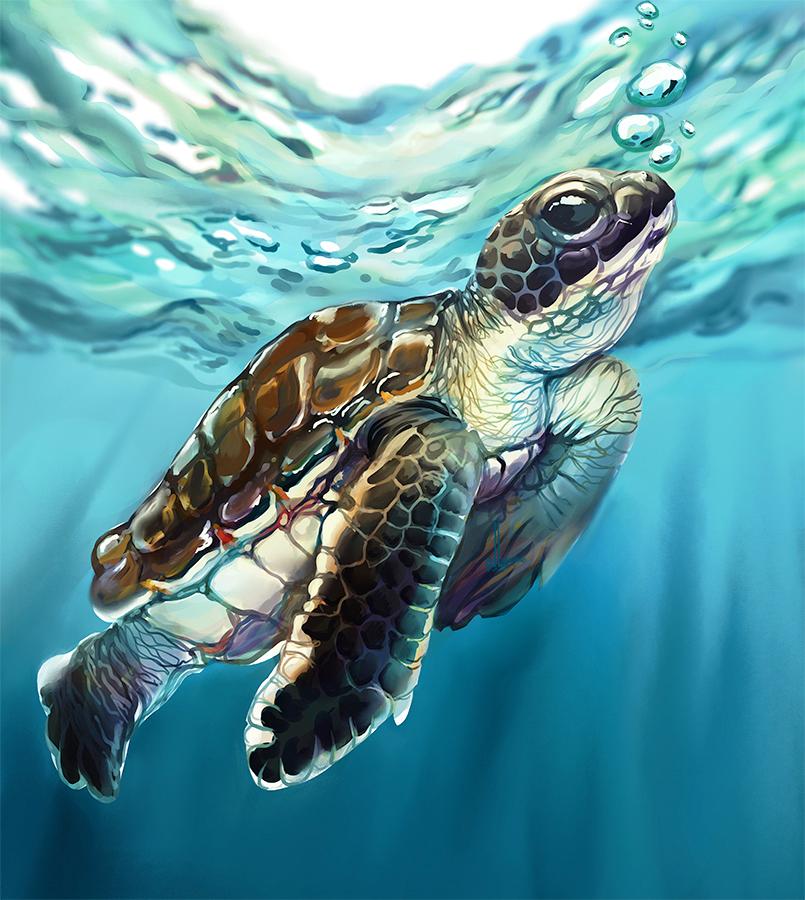 Baby turtle by DesigningLua