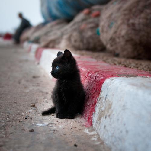 a small black cat