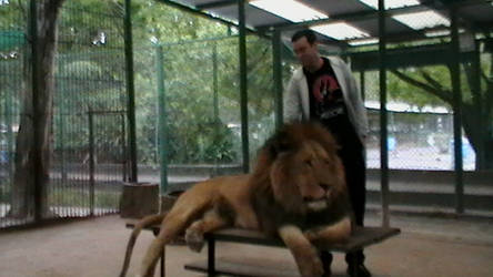 Chilling with lion again...