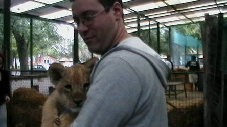 Itty bitty lion...