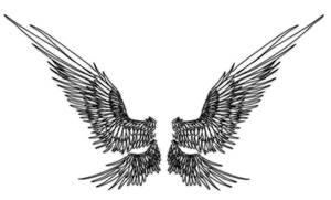 Wing doodles by Kaljaia