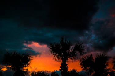 Beach - Palm Tree Sillohette by Freeformedto