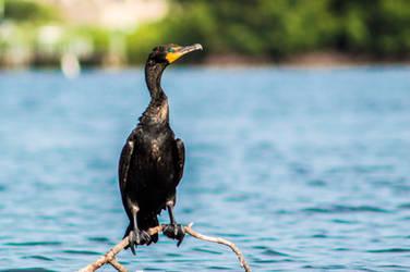 Bird Sanctuary - Cormorant by Freeformedto