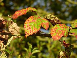 Rusty Leaves by Jaspersmum