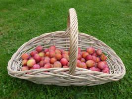 Basket of Plums by Jaspersmum