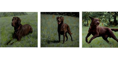 Dog by cayleem2