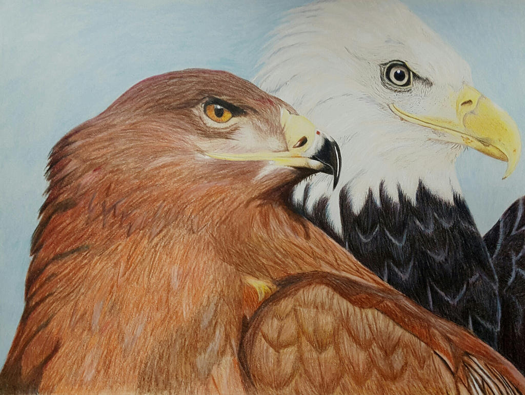 Pair of eagles by Blazinghalo