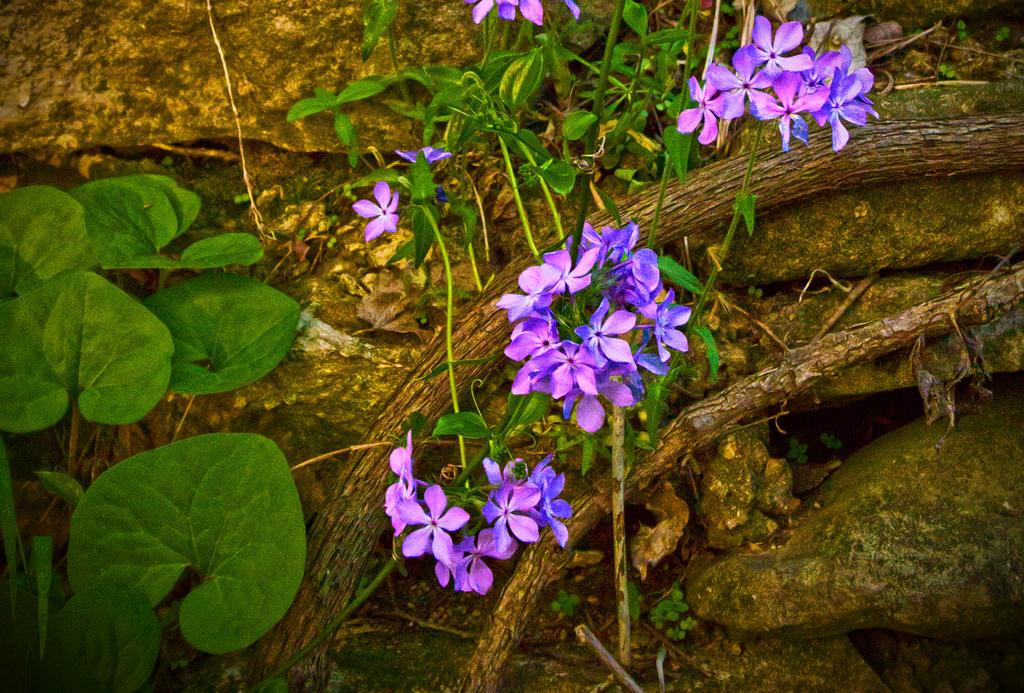 Gans Creek Spring by PompatusOfLove