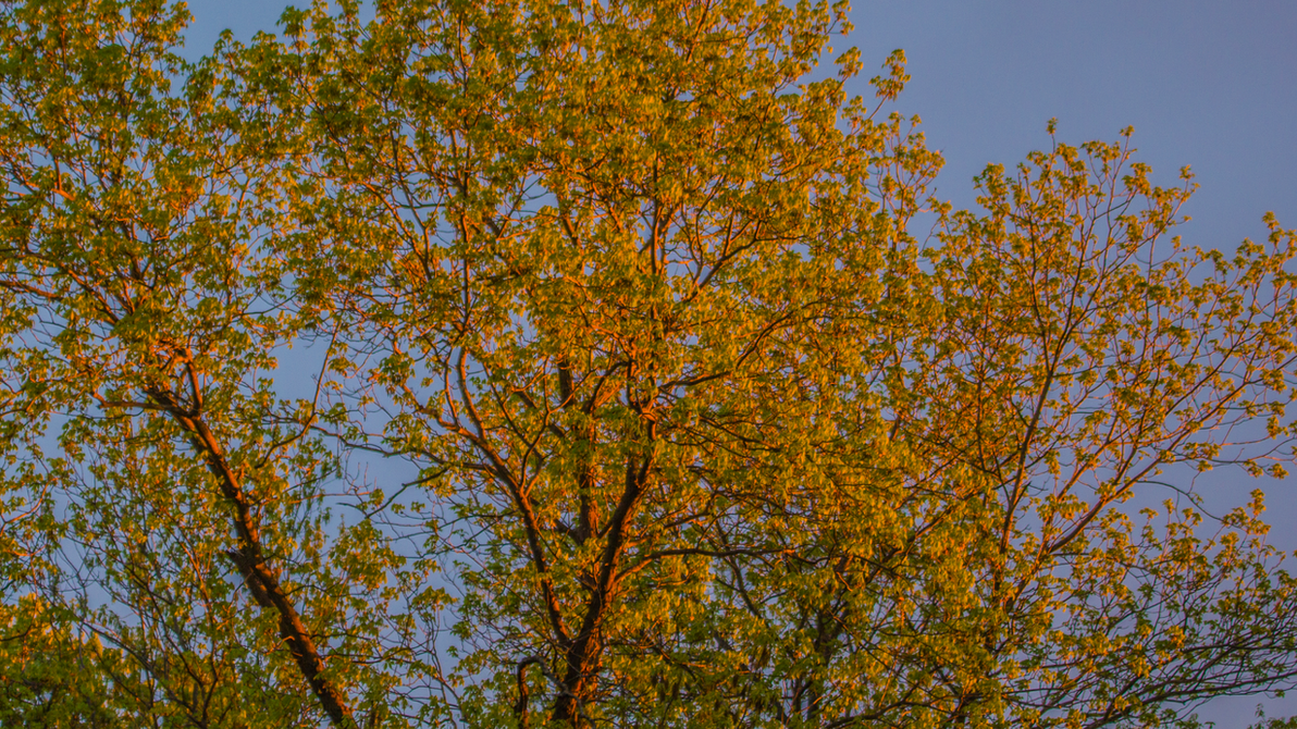 Dusk light on Trees by PompatusOfLove