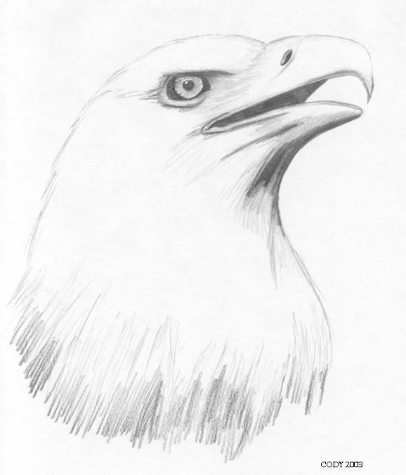 http://img14.deviantart.net/2d88/a/large/indyart/indymisc/my_eagle_sketch.jpg Eagle Drawing Easy