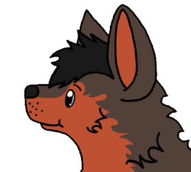 Donder Headshot by Comux