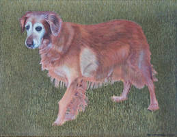 Dog Acrylic Painting by Rollingboxes