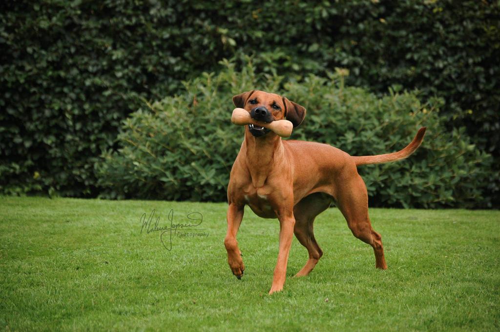 I fetch by Belzique