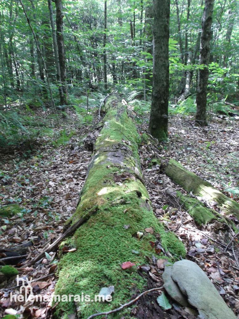 Fallen Forest by Anuden
