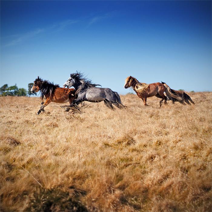 [Skin aanvraag] The Wild Horses 93535259e49a7d746a9a4efcc2fe7ded