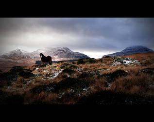 Horse Rhinog Mountains Snow by Matt-ikus