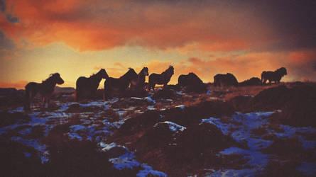 Golden Red Horses by Matt-ikus