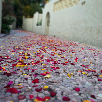 Flowers in the path  by tyronmcd