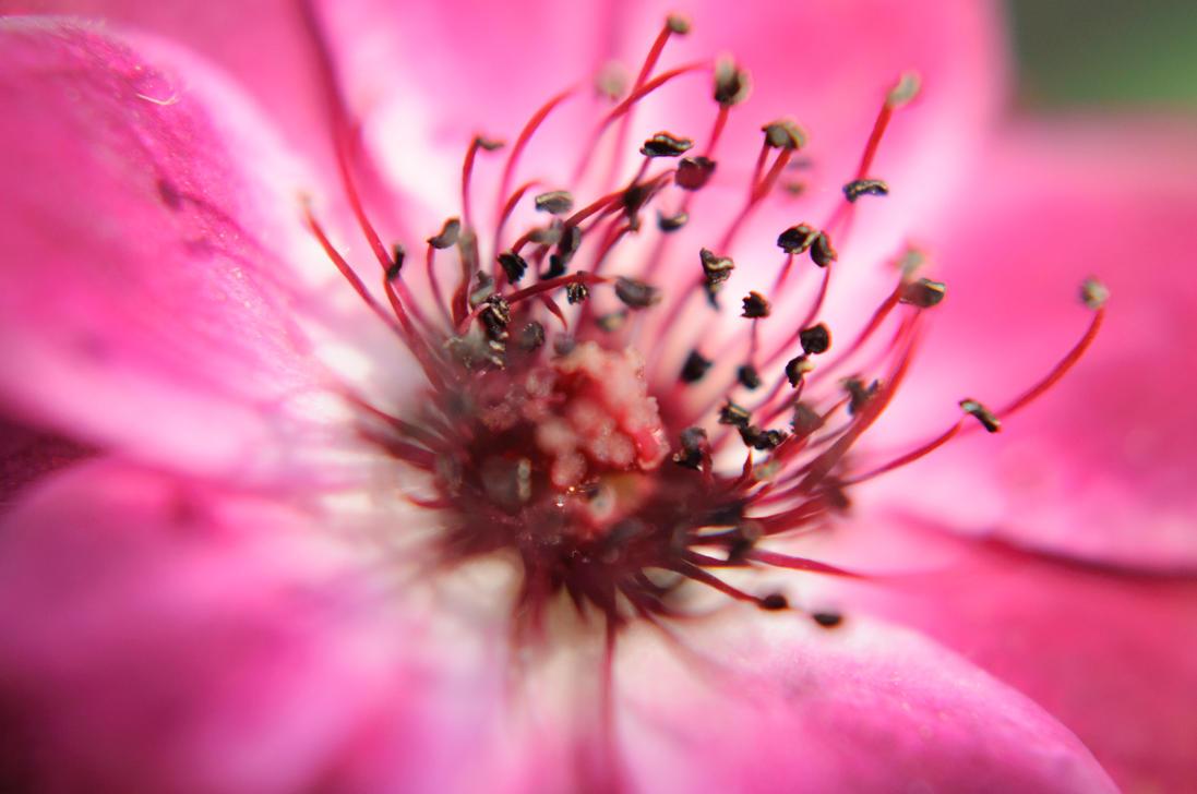 Purple flower by tyronmcd