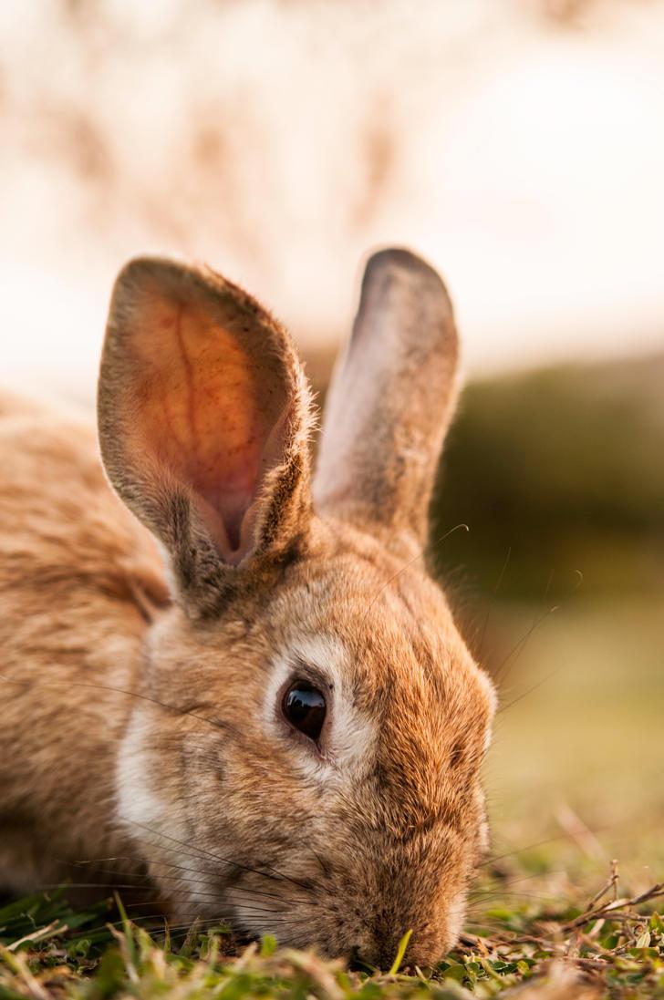 Bunny Nomming by tyronmcd