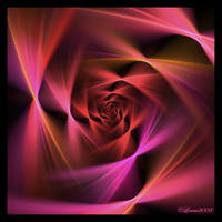 Blurred Rose by Colliemom