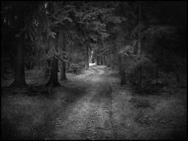 the dark forest by sternenfern