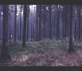 Forest-Wonder by sternenfern