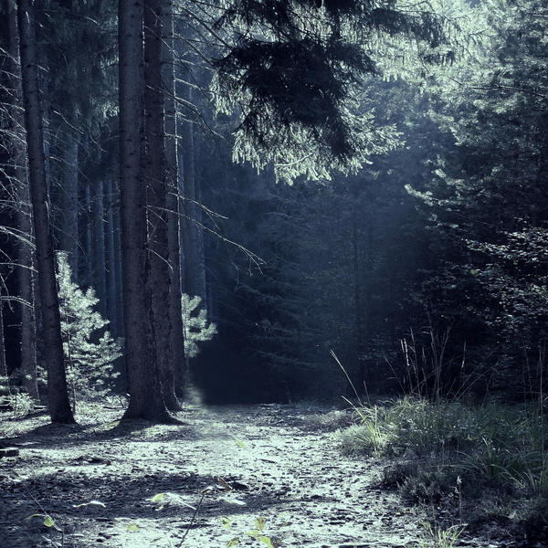 October Walk by sternenfern