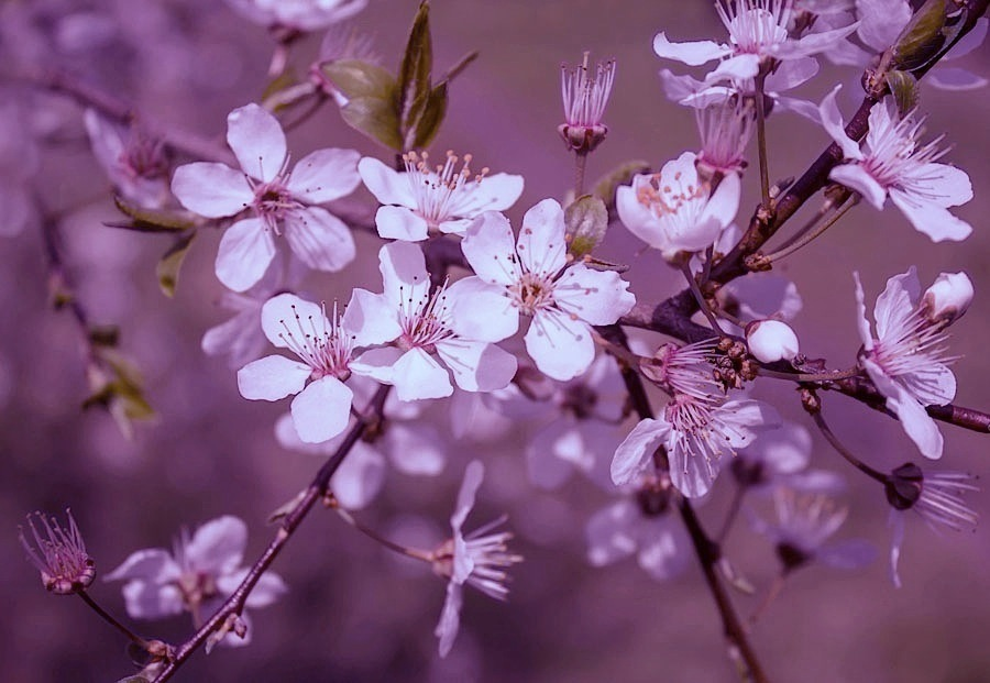 Wonderful spring by sternenfern