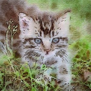 sternenfern's Profile Picture