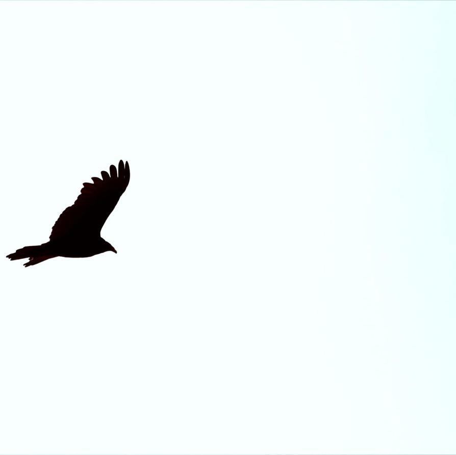 noir ailes by mrdondre