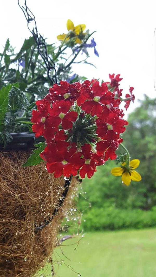 Flower  by mr-jinxs