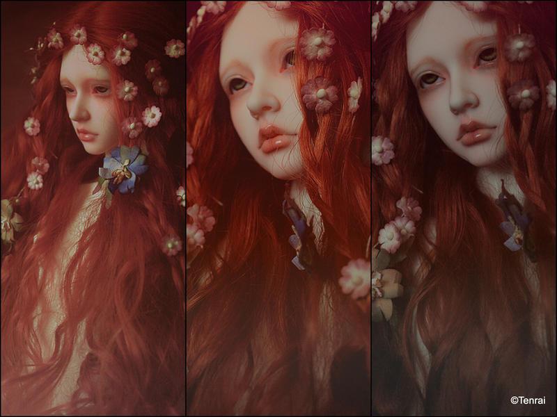 Rose of May