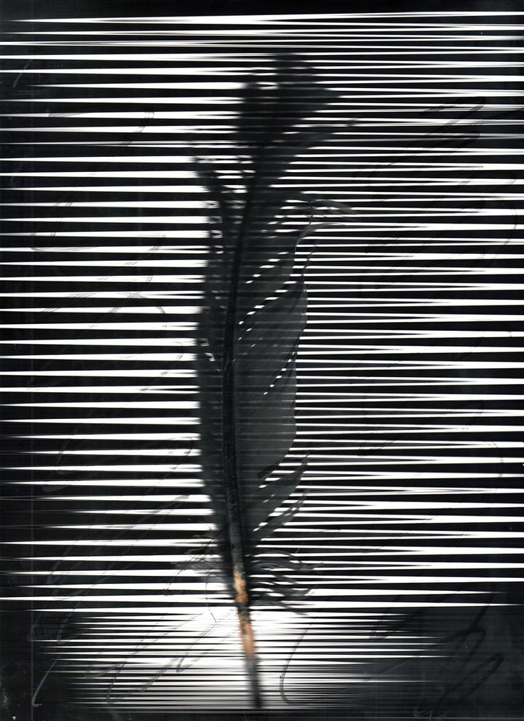 Pluma by jff-art