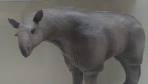 Paraceratherium, the giant rhino