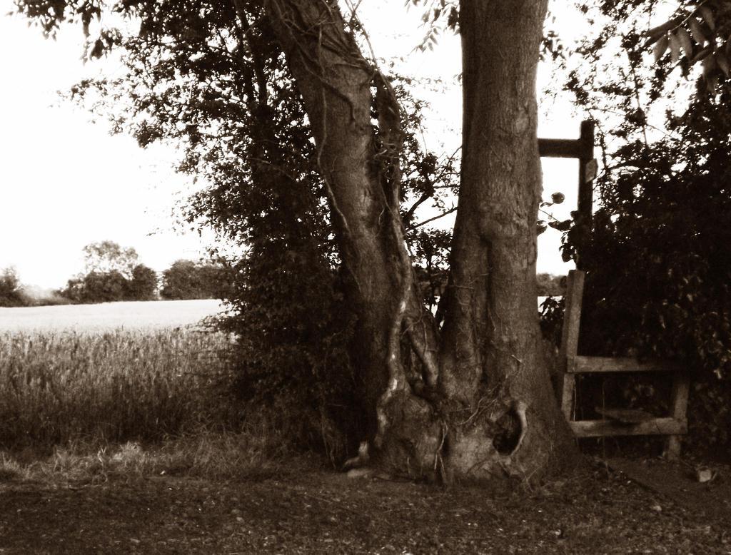 Sepia Tree by markeverard