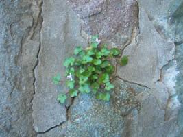 Stone flower by MeaCulpa66