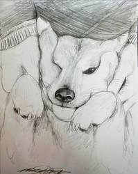 Squish Doggo