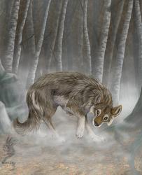 Etoh's Wolf