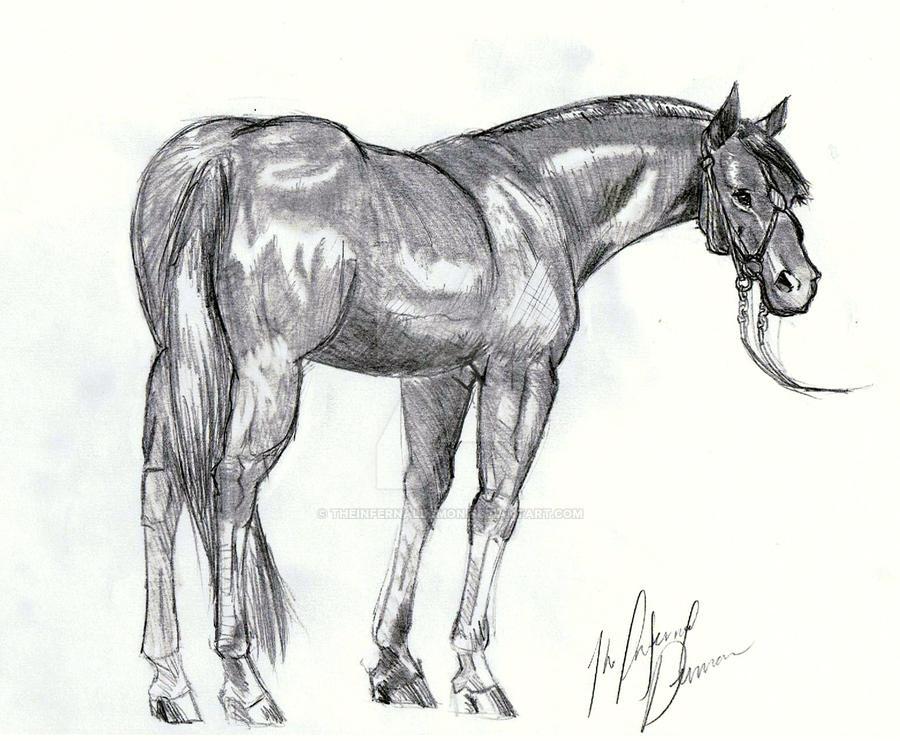Horse Full by TheInfernalDemon