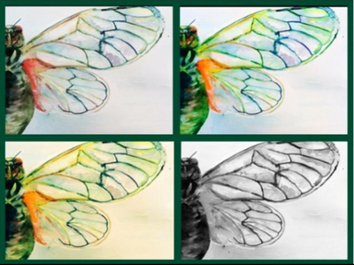 Cicada Wings by maidennamee1