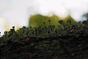 Magic Mushroom Forest by Nimpsu