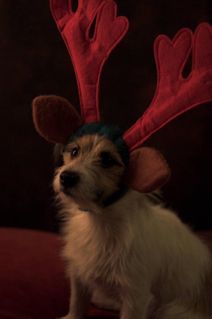 Christmas Dog by Nimpsu