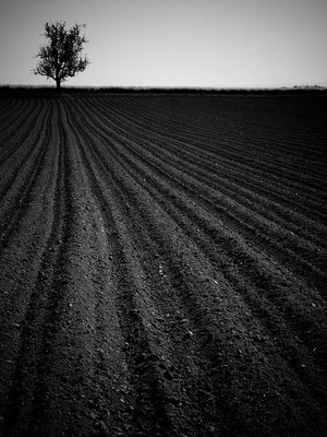 dark field by napoca by Optimal-Photo