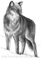 Wolf by Kariinn