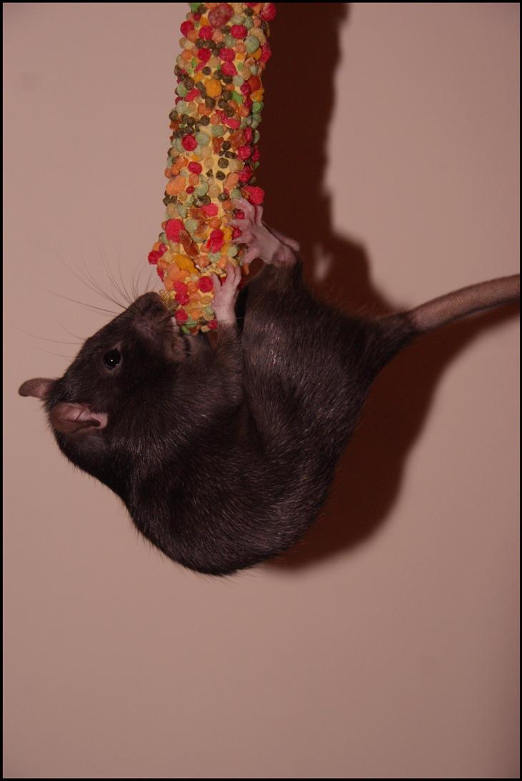 Crazy Rat by Veriena