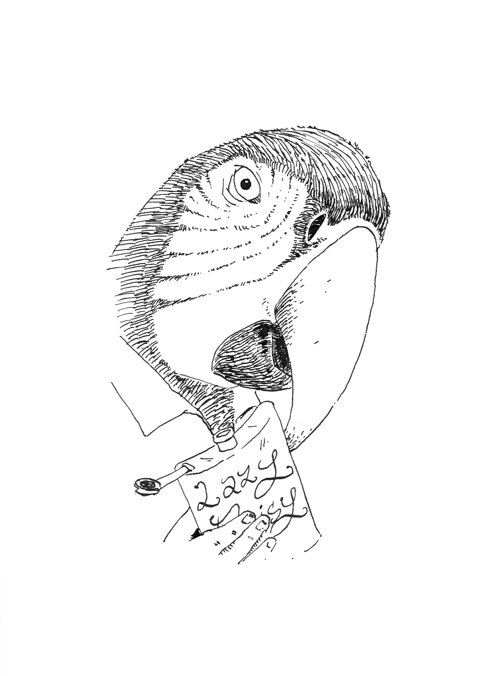 The Parrot by pachryso