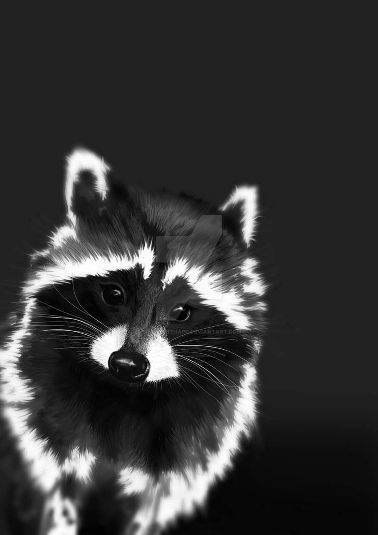 Racoon (trash bandit) by DrawswithaPC
